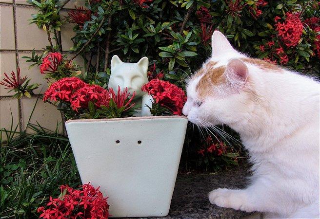 Vaso de Parede Gato Pendurado