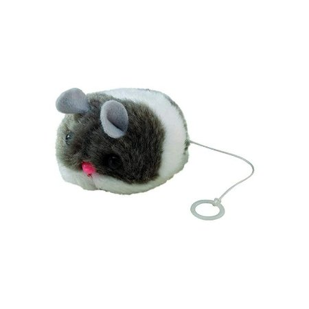 Rato treme-treme com com catnip