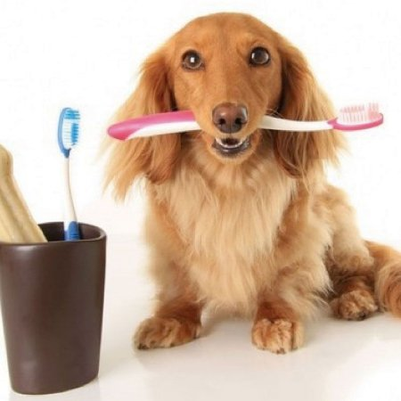 Serviço de Escovação Dental