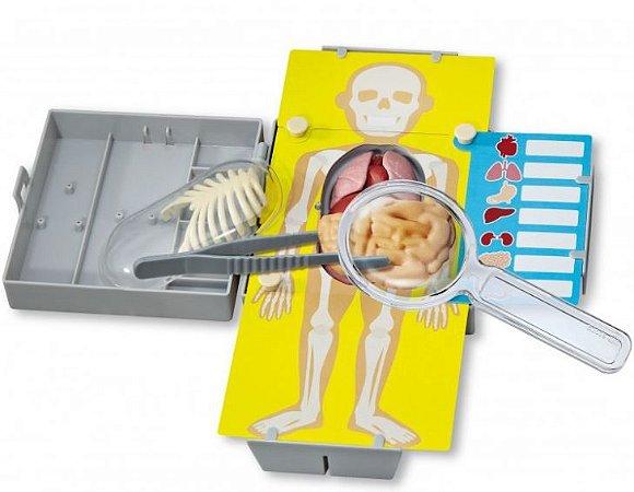 Anatomia - Torso Humano- 4M