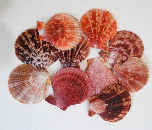 chlamys senatoria unpair (pecten nobilis) mix  - unid