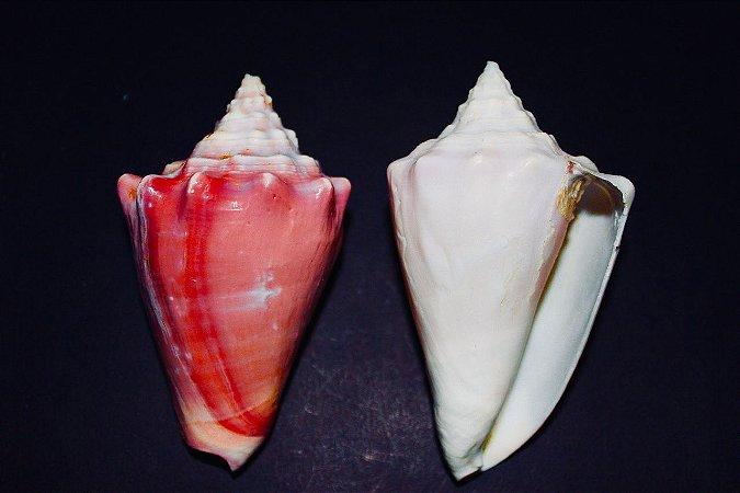rosado 10 cm - unid