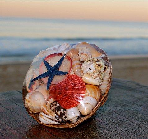 shell pack w/ flat starfish 20 cm  - unid