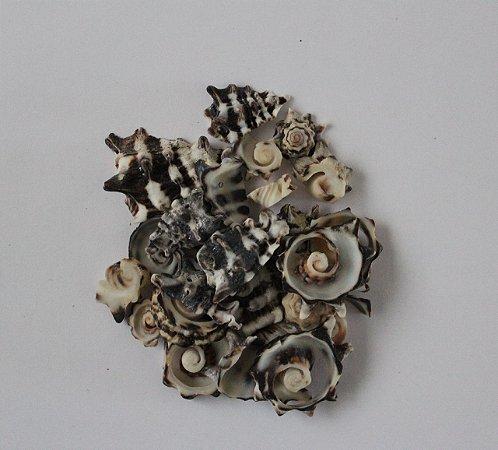 vasum tumbinelum cortado - 750gr