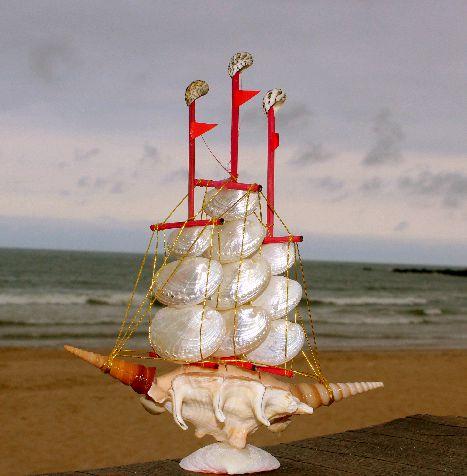 sail boat  haliotis asinina/lambis 30 cm  - unid