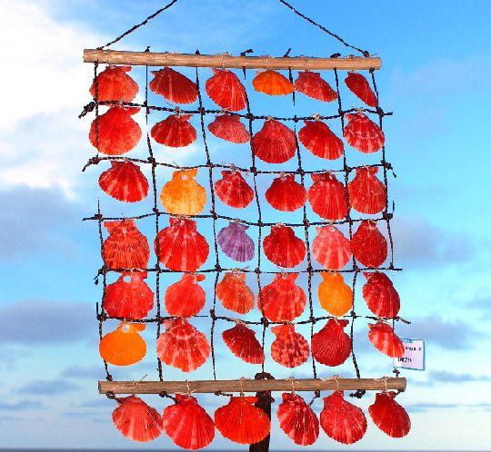 curtain ladder pecten nobilis 6x6 - unid