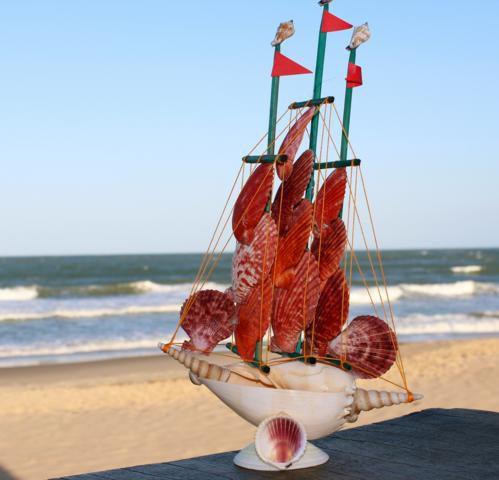 sail boat melo broderipii w pecten nob. - unid