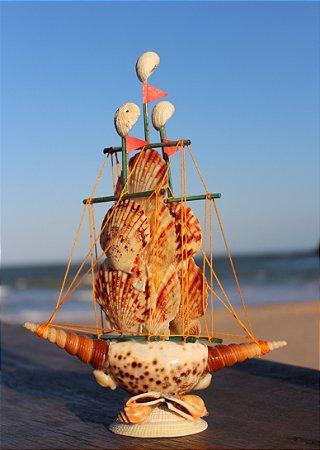 sailboat lambis w/macassarensis  20 cm  - unid
