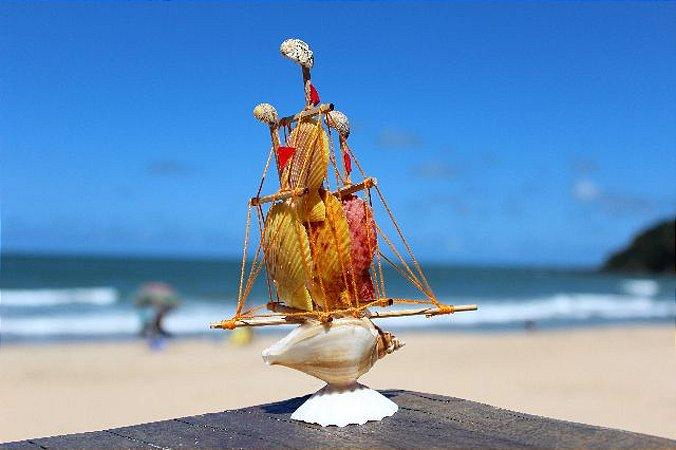 sail boat strombus canarium 15 cm  - unid