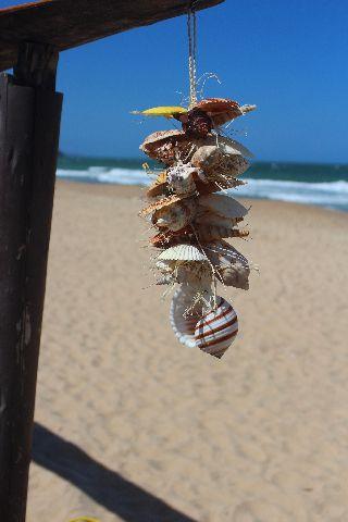 shell garland /tonna sulcosa /rapai - unid