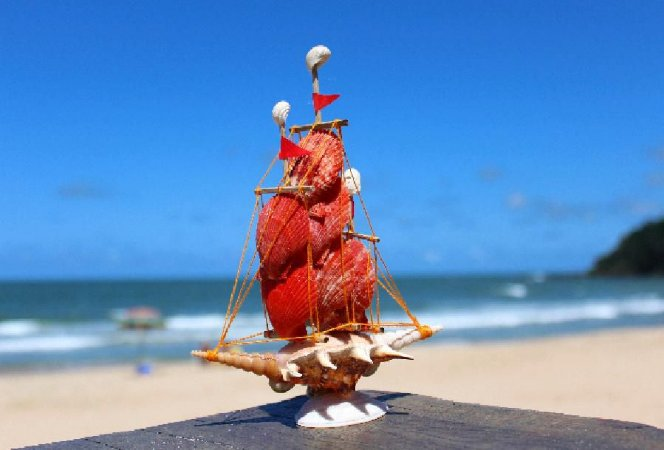 sail boat pecten and lambis 15 cm  - unid