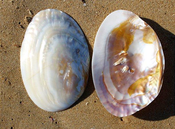 cabibe pearlized river shell unpair 22 cm - unid