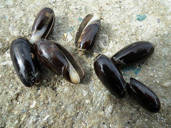 olive brown - 750gr