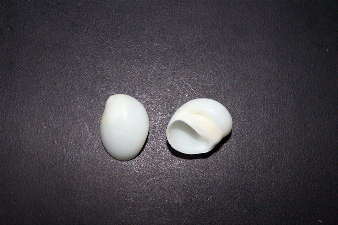 white moon shell - 750gr