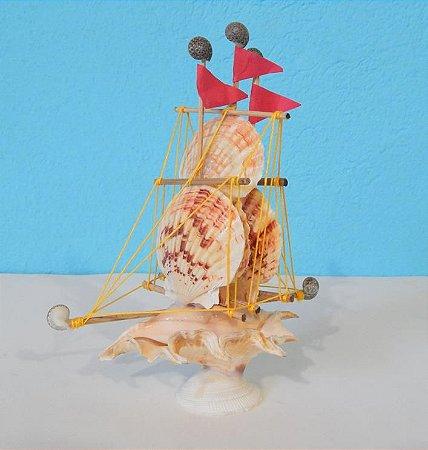 sail boat  lambis w/ macassarensis 15 cm - unid