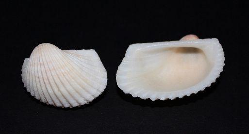 white litub furada - 750gr
