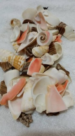 assorted cut shell - 750gr