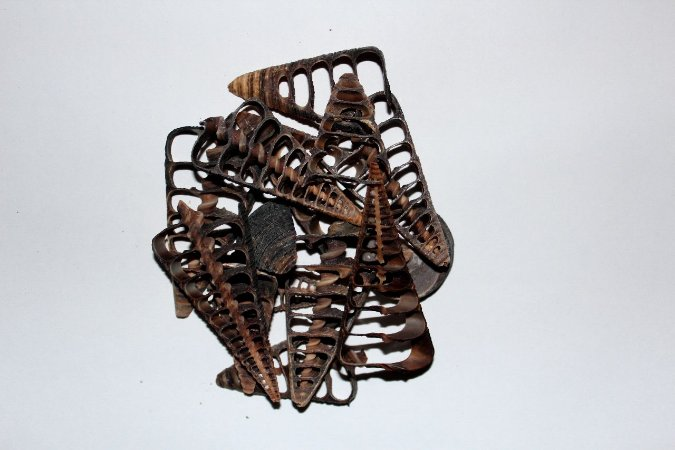 telescopium telescopium cortada - 750gr