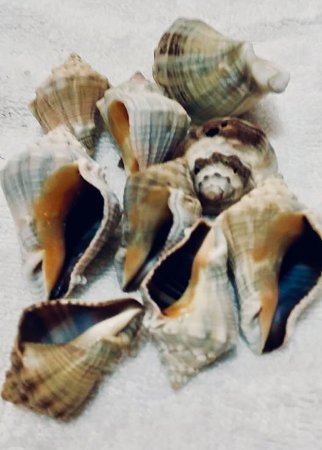 melongina gray - 750gr