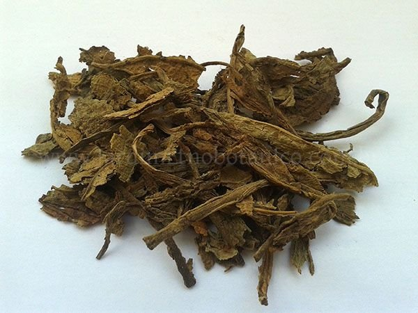 Tabaco índio (Lobélia inflata) - Folhagem
