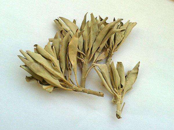 Salvia Branca (Salvia apiana) - Folhagem 10 gramas