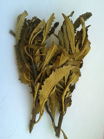Yerba santa (Eriodictyon californicum) - 10 gramas de folhagem