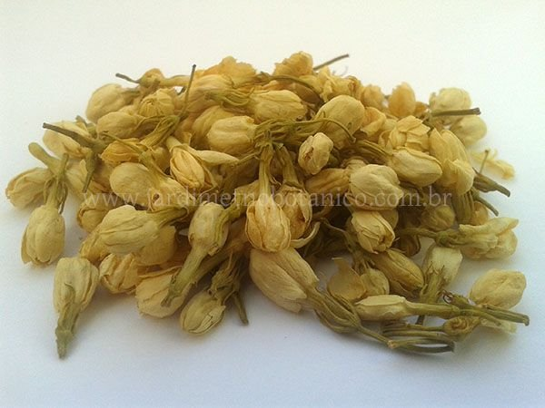 Jasmim (Jasminum officinale) - Flores