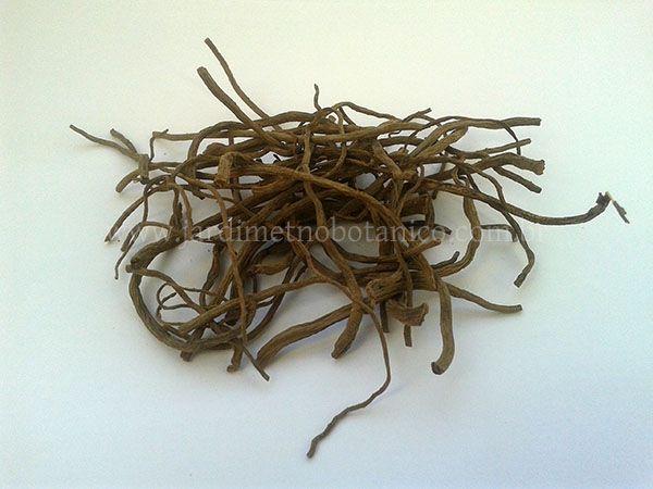 Valeriana (Valeriana officinalis) - Raízes em pedaços
