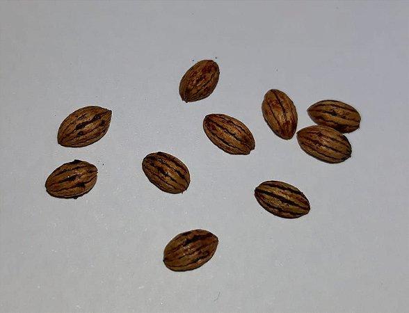 Chacrona (Psychotria viridis) - Sementes para cultivo