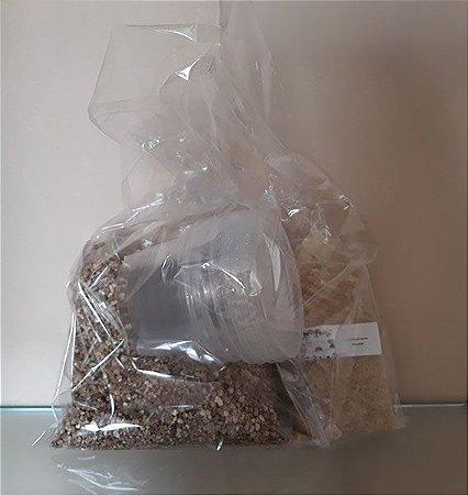Kit de cultivo de cogumelos Psilocybe cubensis