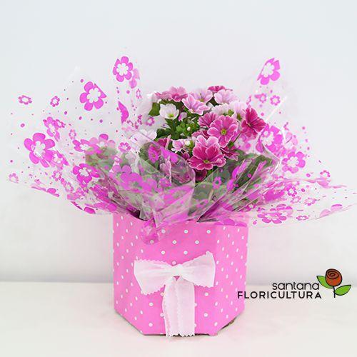 Flor Prímula