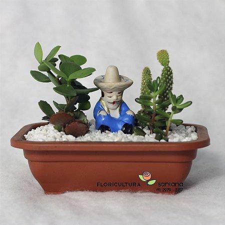 Mini Jardim de Suculentas e Cactos