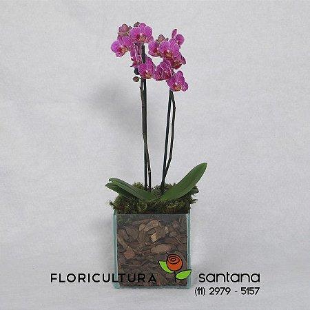 Orquídea Phalænopsis Lilás no Vidro