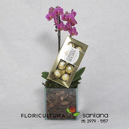 Orquídea Phalænopsis Lilás com Ferrero Rocher