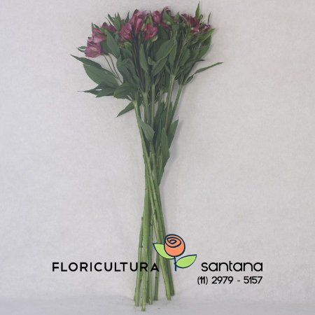 Alstroemeria Pink Esu - 10 hastes