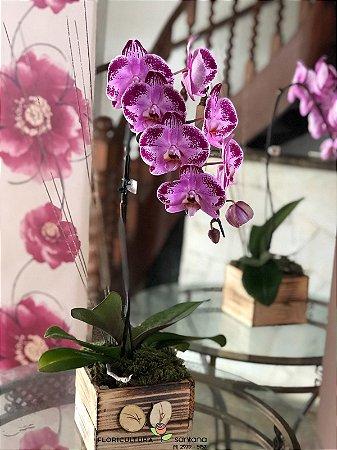Orquídea Lilas 2 (a cor pode variar).