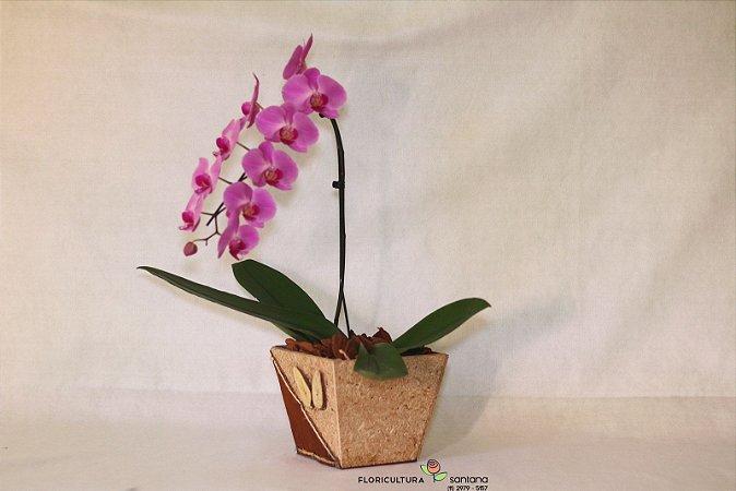 Orquídea Phaleonopsis Rosa