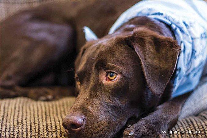 Quadro em canvas ANIMAIS - Cachorro I