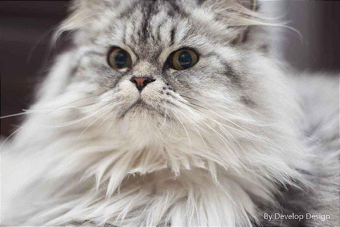 Quadro em canvas ANIMAIS - Gato I