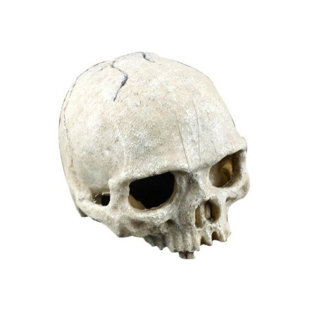 Toca Cranio