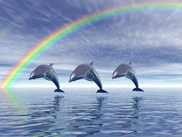Curso EAD Reiki dos Golfinhos ou Dolphin Reiki