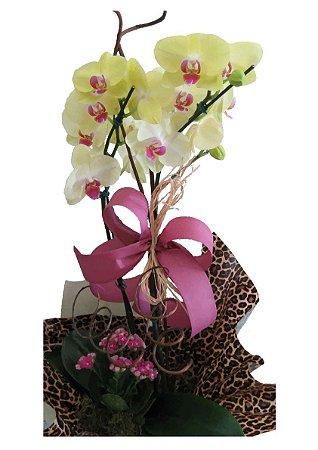 Orquídeas com Kalanchoe