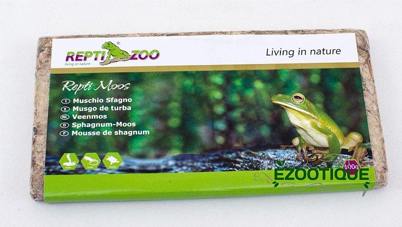 Musgo verde Sphagnum para terrários