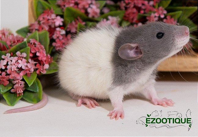 Ratos Twisters Dumbo - Mansinhos