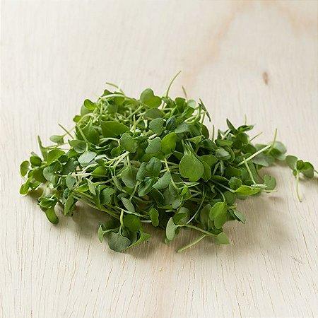 Microfolhas (brotos) de Basílico Verde