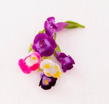 Flor Amor de verão