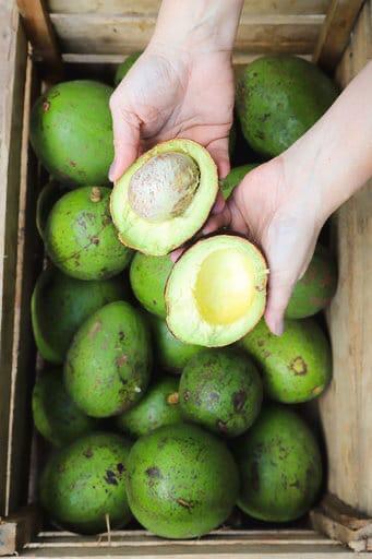 Abacate orgânico -700g