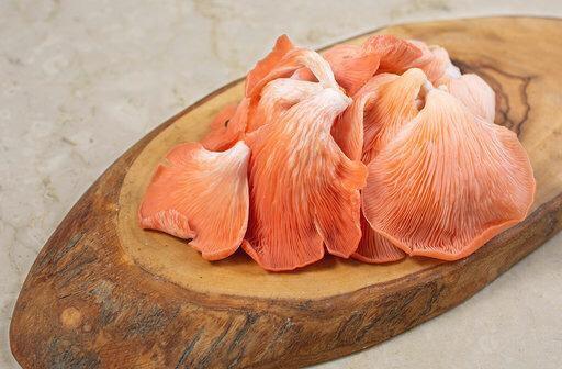 Cogumelo Shimeji Salmão Orgânico - 200g