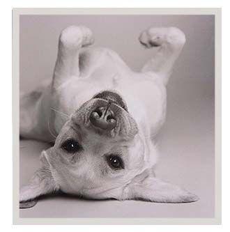 Quadro cachorro