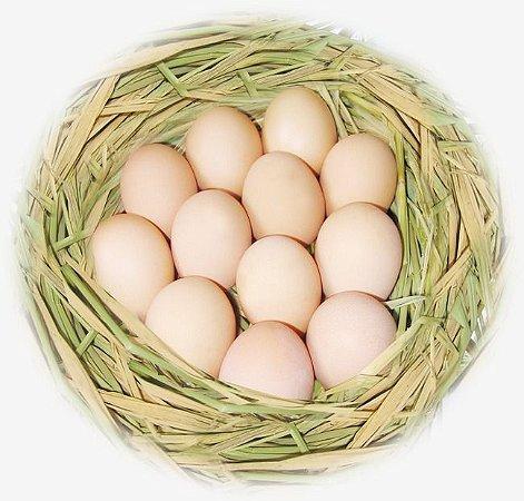 Ovos de Colônia